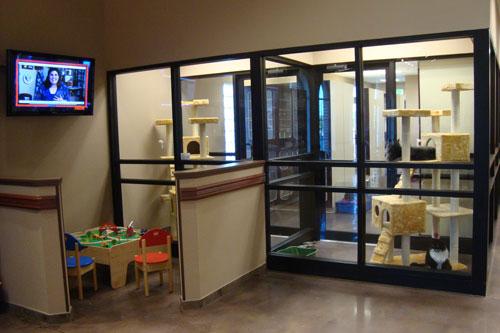 Take A Tour Of Our San Antonio Veterinary Hospital